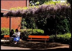 旧図書館前の藤棚「卒業アルバム1981~1985」より